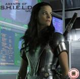 Shield 1x15